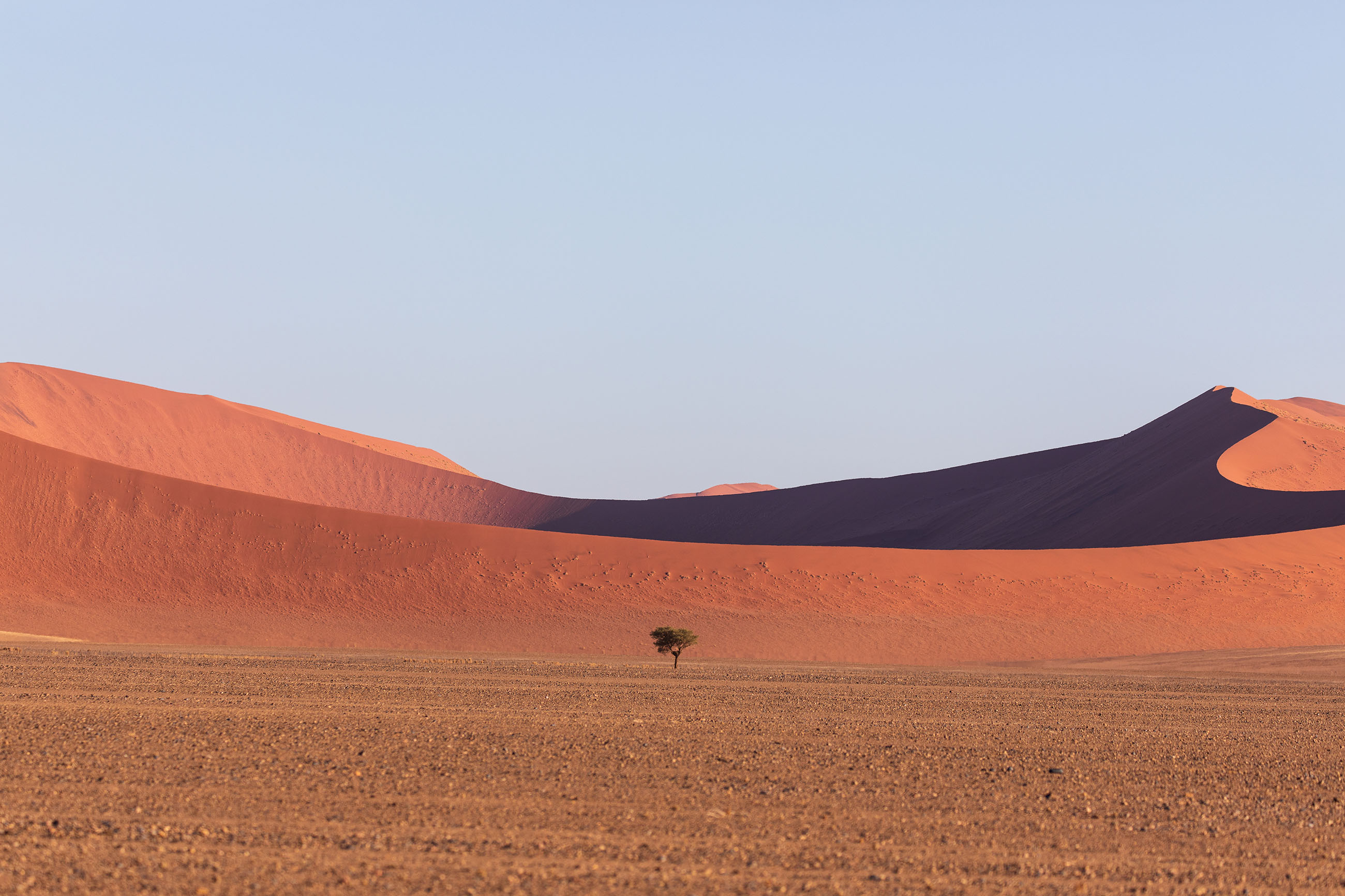 Tree in Namib Desert - The Moving Lens
