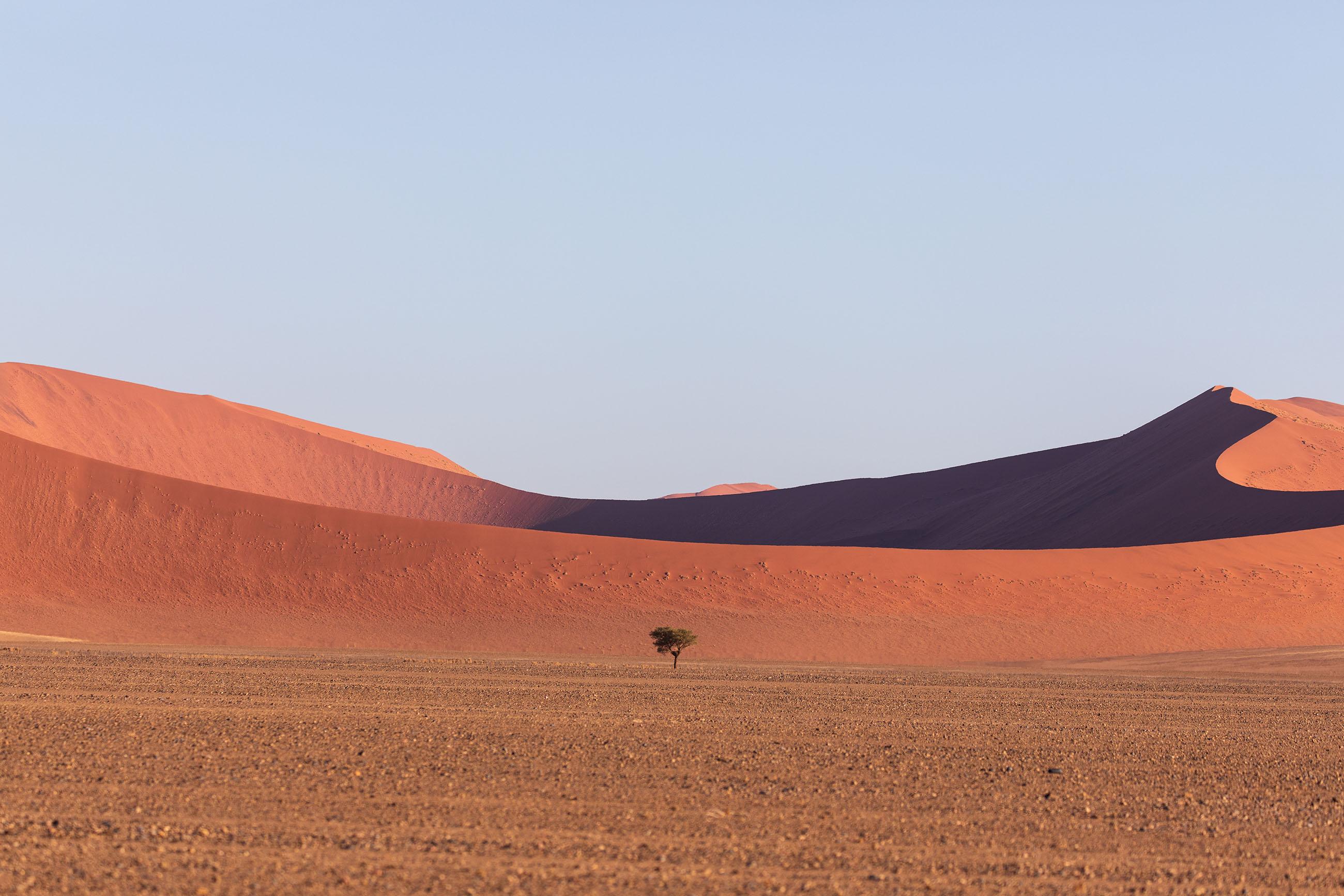 Tree in Namib Desert - The Moving Lens