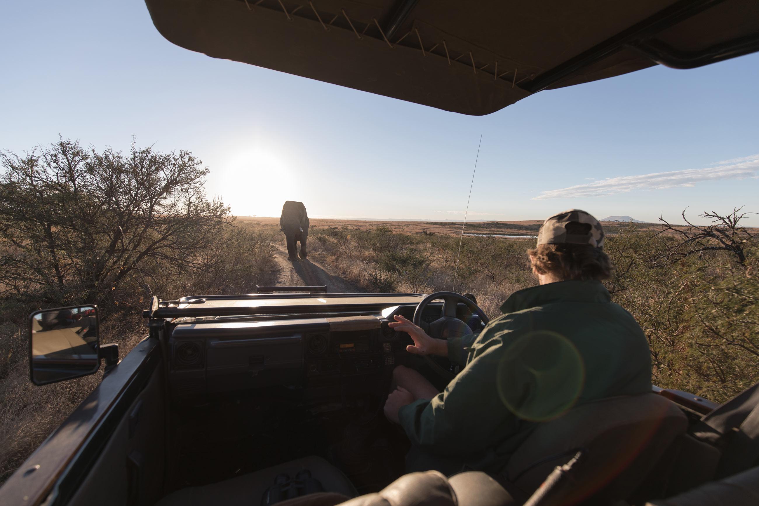 nambiti-game-reserve-south-africa-cheetah-ridge-elephant-sunrise