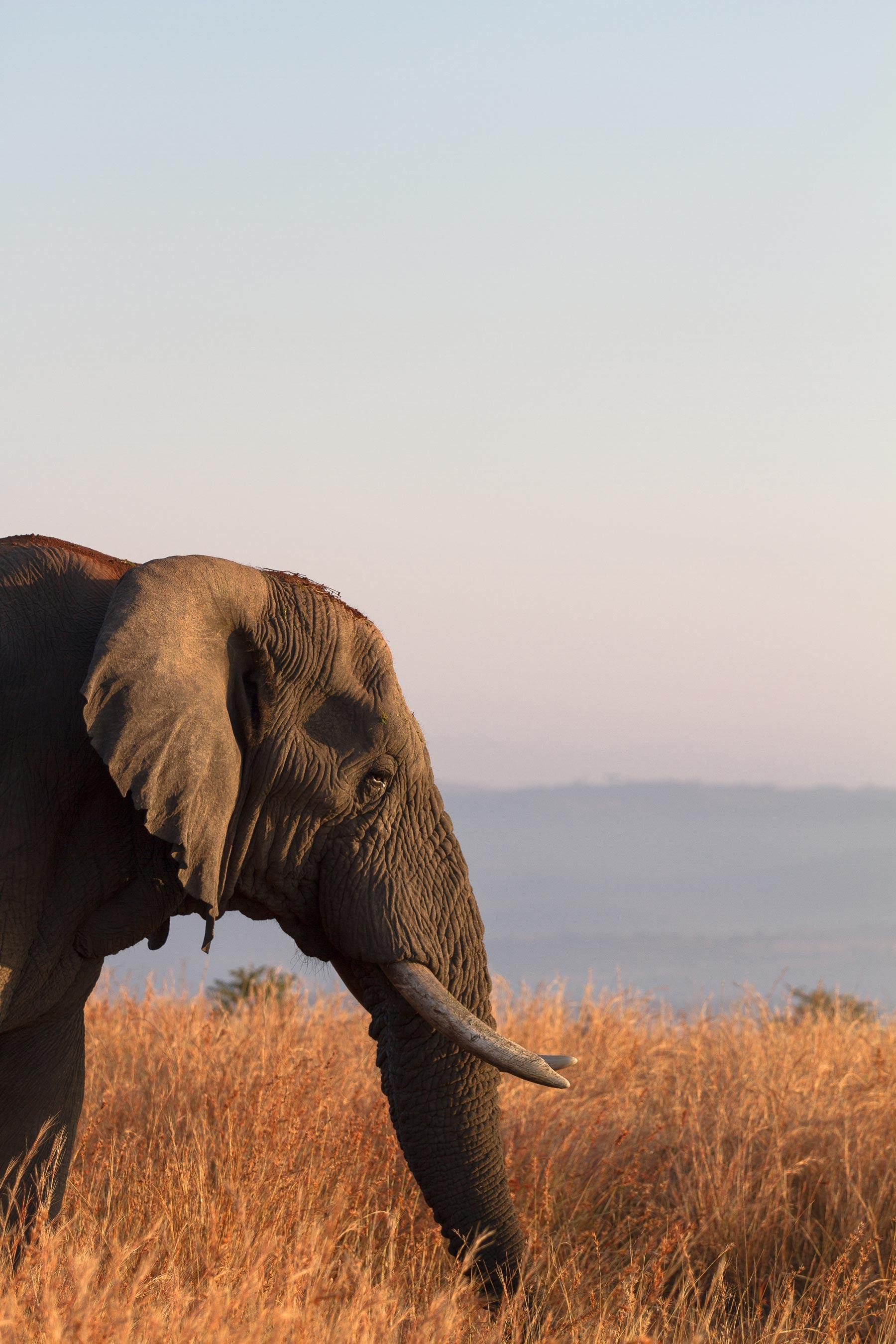 the moving lens - nambiti reserve - cheetah ridge - bull elephant