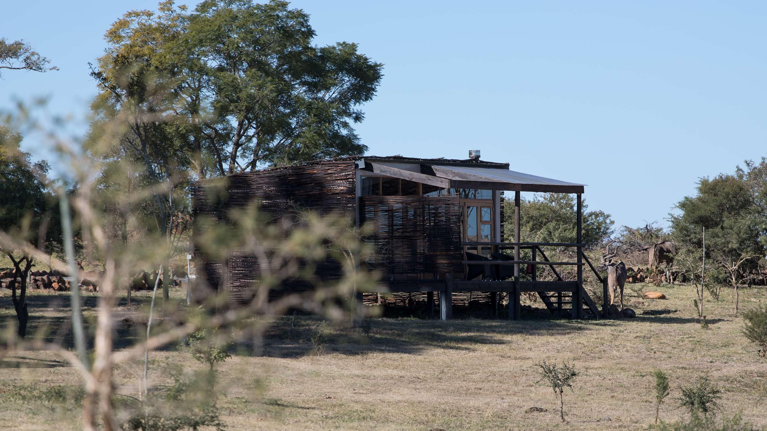 cheetahridge-nambiti-travel-accomodation-review-southafrica-gamereserve